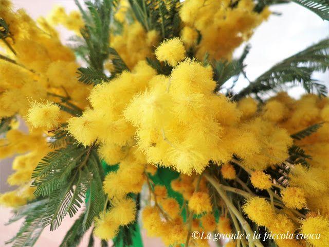 Kwiat mimozy